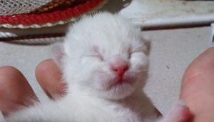 2 days old kitten